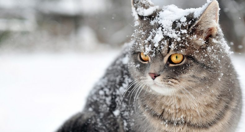 Snow-blivion: Top 5 Snow Songs
